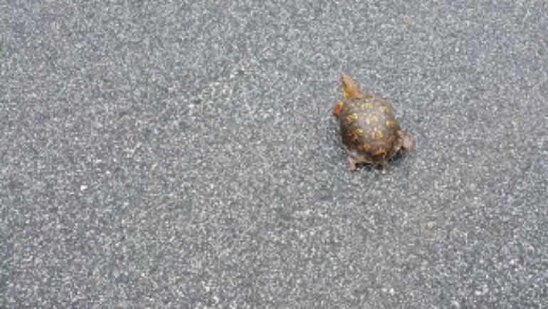 Turtle Drive