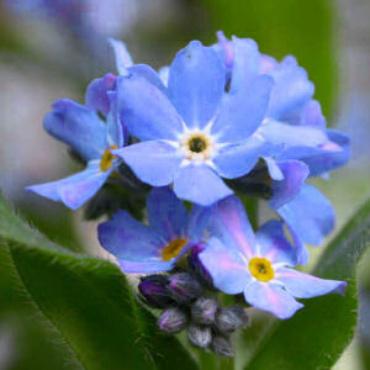 Forgotten Flores