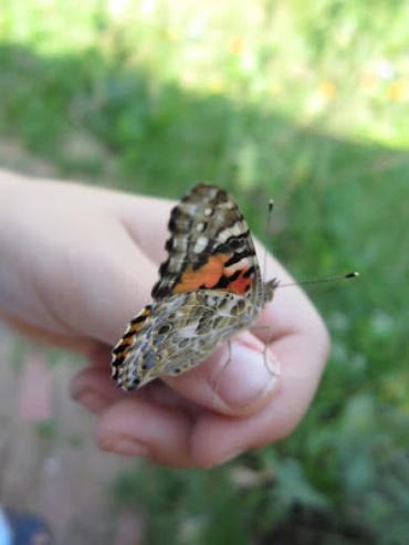 Las Mariposas Senoritas Pinturadas