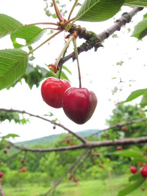 Life is a Bucket Full of Cherries