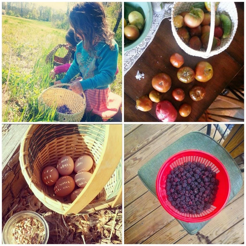 baskets on the farm