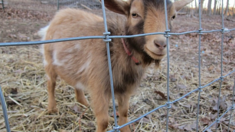 Homesteading: The Fence Part 2