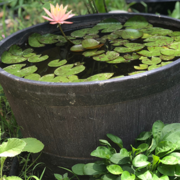How to create a mini water garden on a budget.