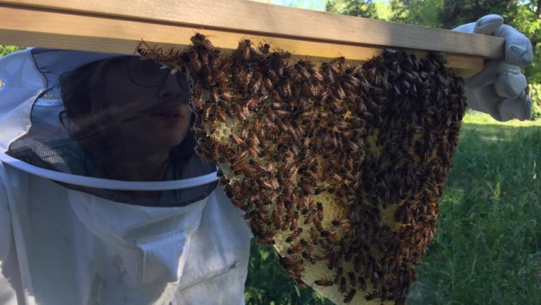 Beekeeping: FAQs, and tips.